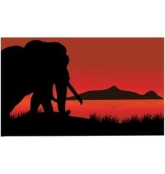 Single elephant silhouette of scenery vector image