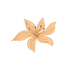 beautiful tropical flower hand drawn vector image vector image