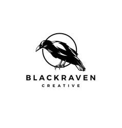 Black raven crow logo icon vector