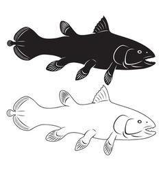 coelacanth vector image