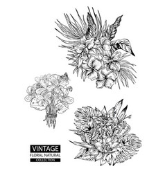 floral outline coloring vintage collections vector image