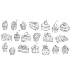 Cakes cheesecakes sketch pastry dessert sweets vector