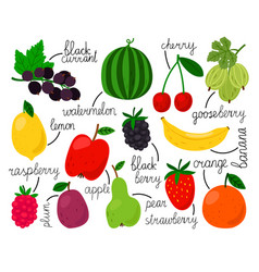 hand drawn fruits collection vector image