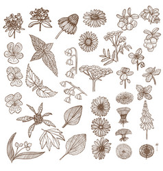 set of medicinal plant elements in hand drawn vector image