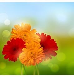 Gerbera Flower Background vector image vector image