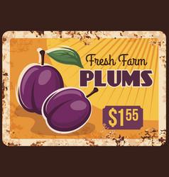 Plums rusty metal plate fruits food farm market vector