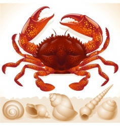 red crab and few seashells vector image