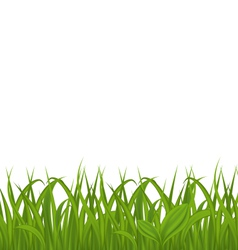 Fresh green grass isolated on white background vector image vector image