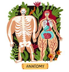 Human anatomy set vector