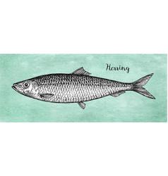 ink sketch herring vector image