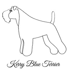 Kerry blue terrier dog coloring vector