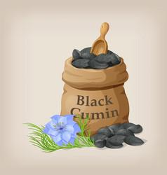 nigella sativa black cumin in small sack vector image