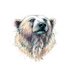 Portrait of a polar bear head from a splash of vector