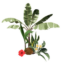 tropical palm bananas tree coconut red hibiscus vector image