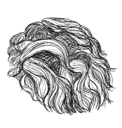 Hand drawn curly hair vector image