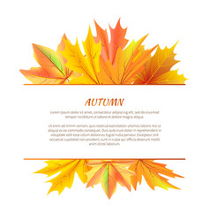 autumn background with bunch maple leaves vector image