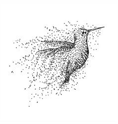 hummingbird particle vector image