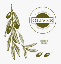 olive branch hand drawn food engraved style vector image
