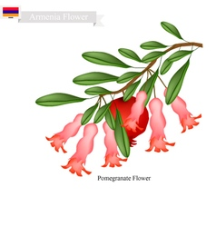 Pomegranate Flowers The Popular Flower of Armenia vector