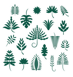 Set abstract stylized tropical leaves vector