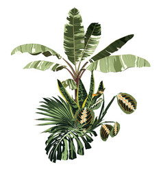 tropical palm bananas tree and exotic composition vector image