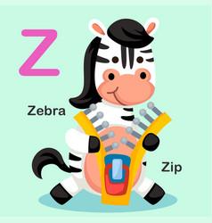 isolated animal alphabet letter z-zip zebra vector image vector image