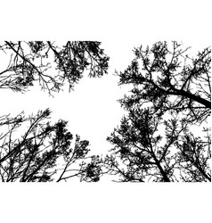 Black leafless tree branches vector