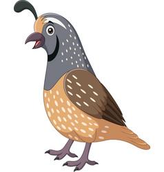 Cartoon smiling quail bird on white background vector