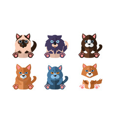 cats of different breeds set cute cartoon animals vector image