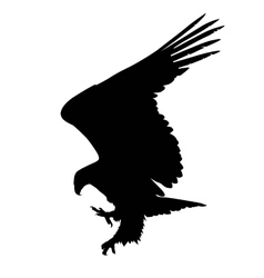 eagle hunting vector image vector image