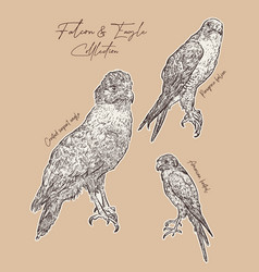Falcon and eagle hand draw sketch vector