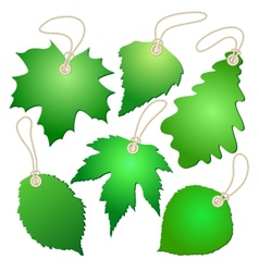 Hanging tags with green leaves vector image