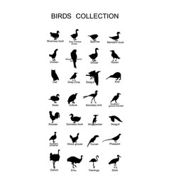 Large bird collection silhouette isolated vector