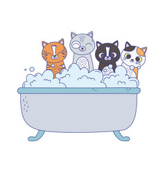 Little cats in bathtub grooming pet isolated vector