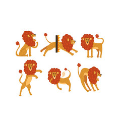 set cute funny lion cartoon character in vector image