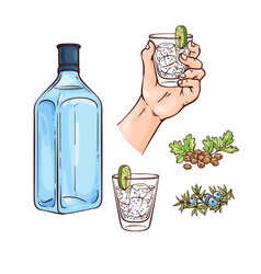 Set gin and tonic cocktail vector