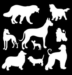 White silhouettes dogs on a black background vector