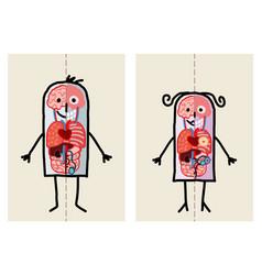 cartoon man and woman anatomy vector image