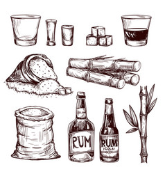Composition of alcoholic beverage rum vector