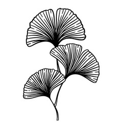 ginkgo biloba branch vector image