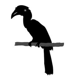 Hornbill silhouette vector