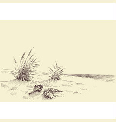 empty beach sea shells in sand vector image