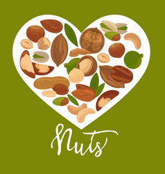 Nuts heart poster of organic raw nut vector