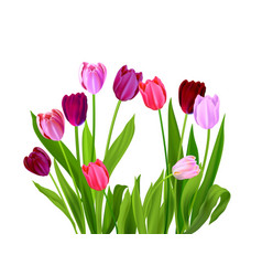 Tulips spring nature vector
