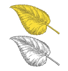 Autumn leaf in engraving style vector image