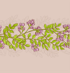 Astragalus pattern vector