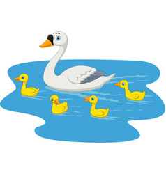 cartoon swan family swimming in the pond vector image