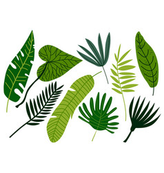 tropical leaves set exotic jungle green palm tree vector image
