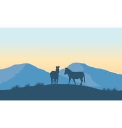 Two zebra silhouette on the mountain vector image