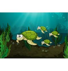 turtles vector image vector image